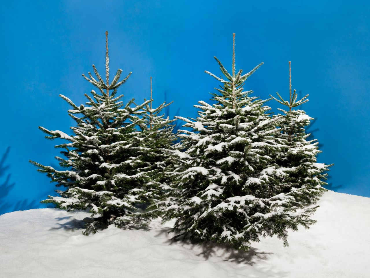 White Christmas Tree Christmas Tree Artificial Snow