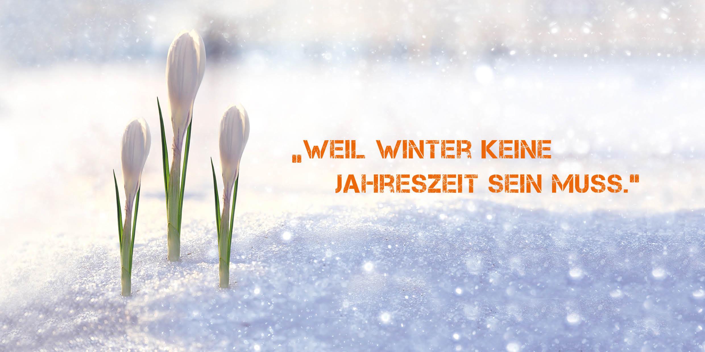 Unvergessliche Winterwelten mit Dekoschnee und Dekoeis